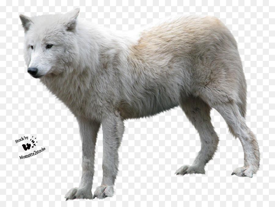 Descarga gratuita de Coyote, El Lobo ártico, Tundra De Alaska Lobo Imágen de Png