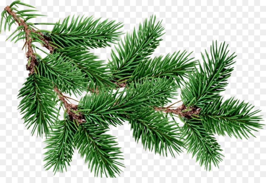 Descarga gratuita de Fir, Pino, árbol Imágen de Png