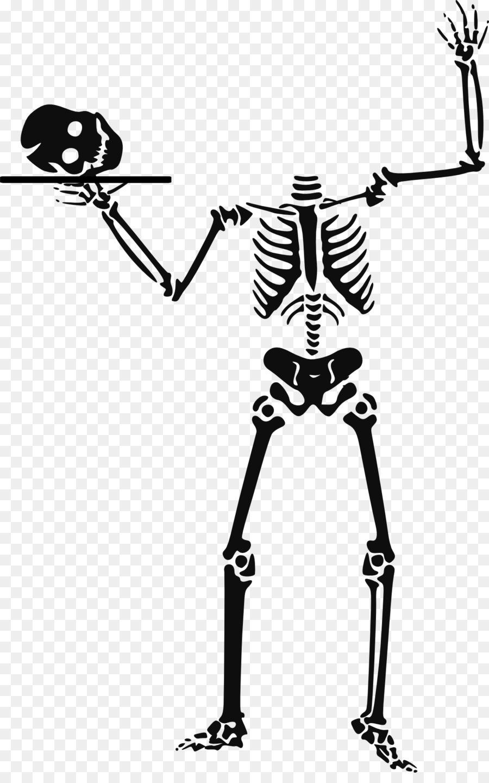Descarga gratuita de Esqueleto, Esqueleto Humano, Cráneo Imágen de Png