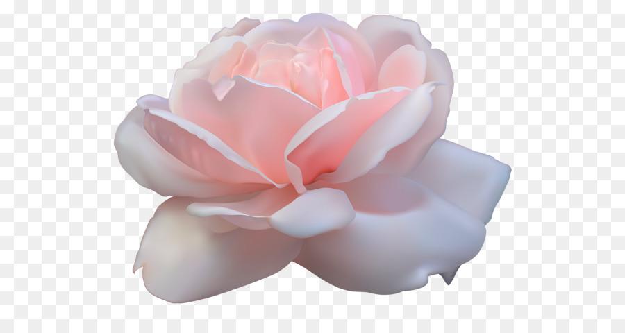 Descarga gratuita de Rosa, Flor, Fondo De Escritorio Imágen de Png