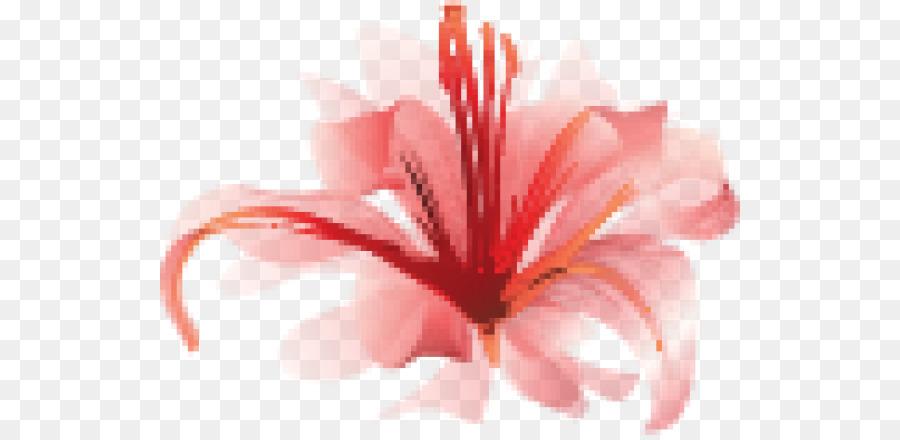 Descarga gratuita de Araña Roja Lily, Rojo, Lilium Imágen de Png
