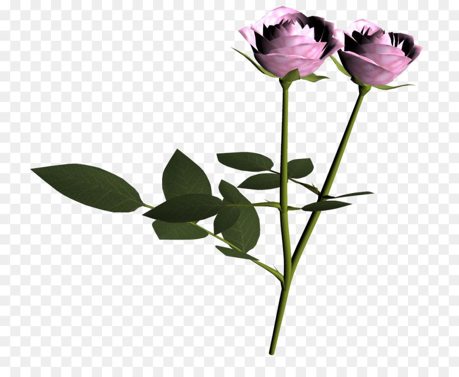 Descarga gratuita de Las Rosas De Jardín, Jardín, Rosa imágenes PNG