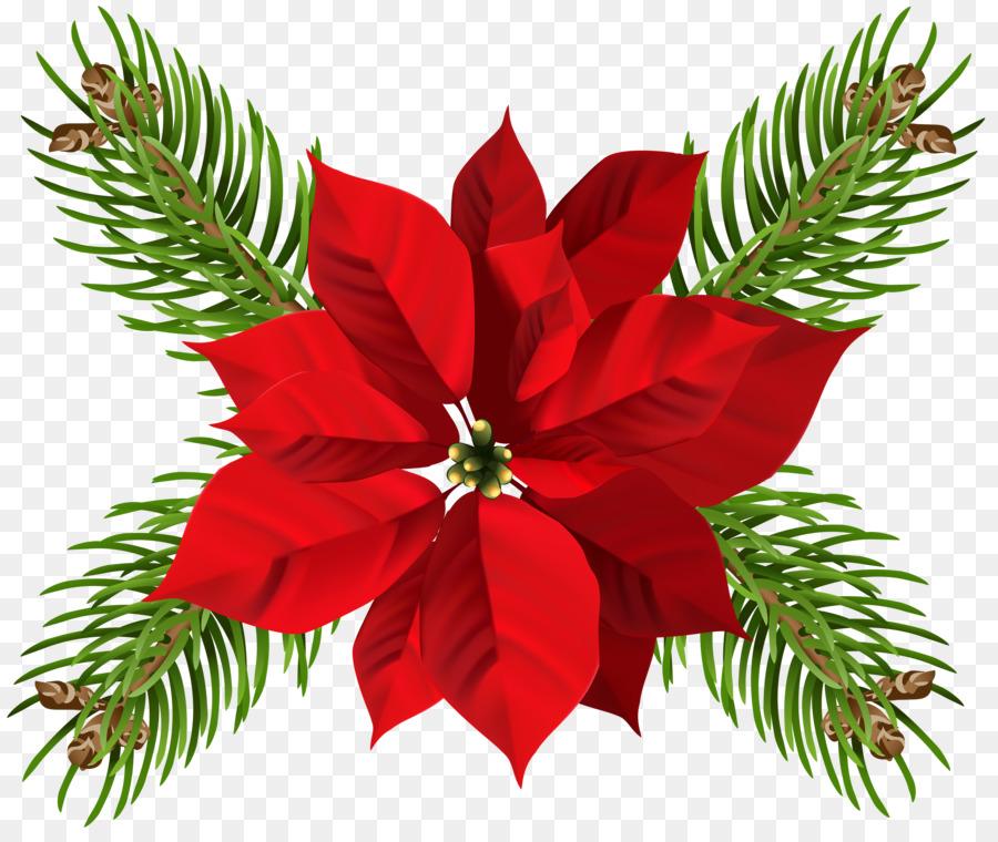 Descarga gratuita de La Flor De Pascua, Flor, La Navidad imágenes PNG