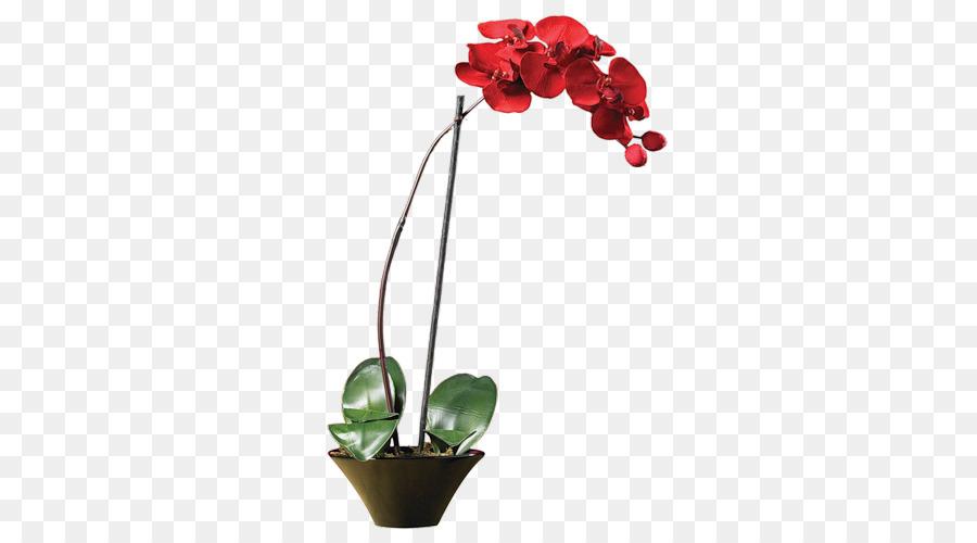Descarga gratuita de La Polilla De Las Orquídeas, Las Orquídeas, Flor Imágen de Png