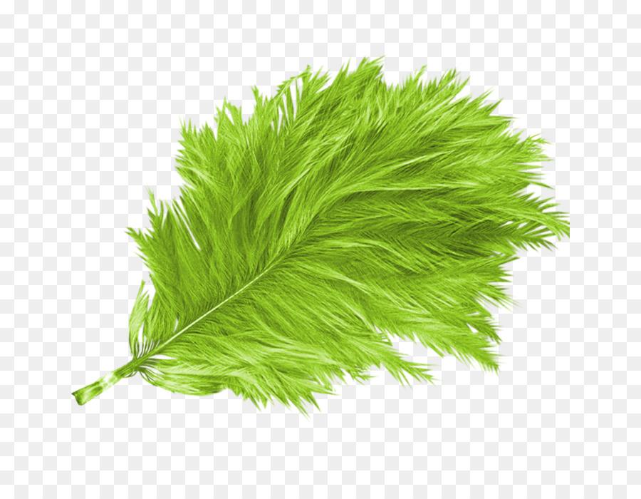 Descarga gratuita de Pluma, Verde, Pájaro Imágen de Png