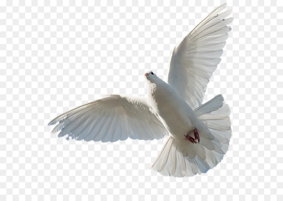 Descarga gratuita de La Biblia, Espíritu Santo, Sagrado Imágen de Png
