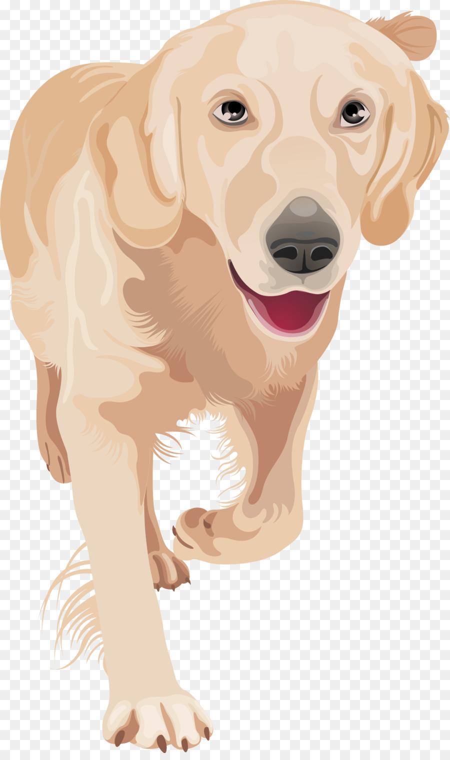 Descarga gratuita de Golden Retriever, Labrador Retriever, Cachorro imágenes PNG