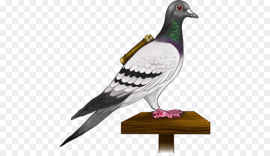 Descarga gratuita de Homing Pigeon, Inglés Paloma Mensajera, Columbidae Imágen de Png