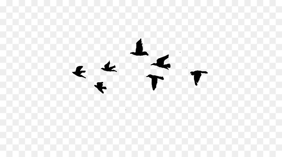 Descarga gratuita de Pájaro, Las Aves En Vuelo, Ala Imágen de Png