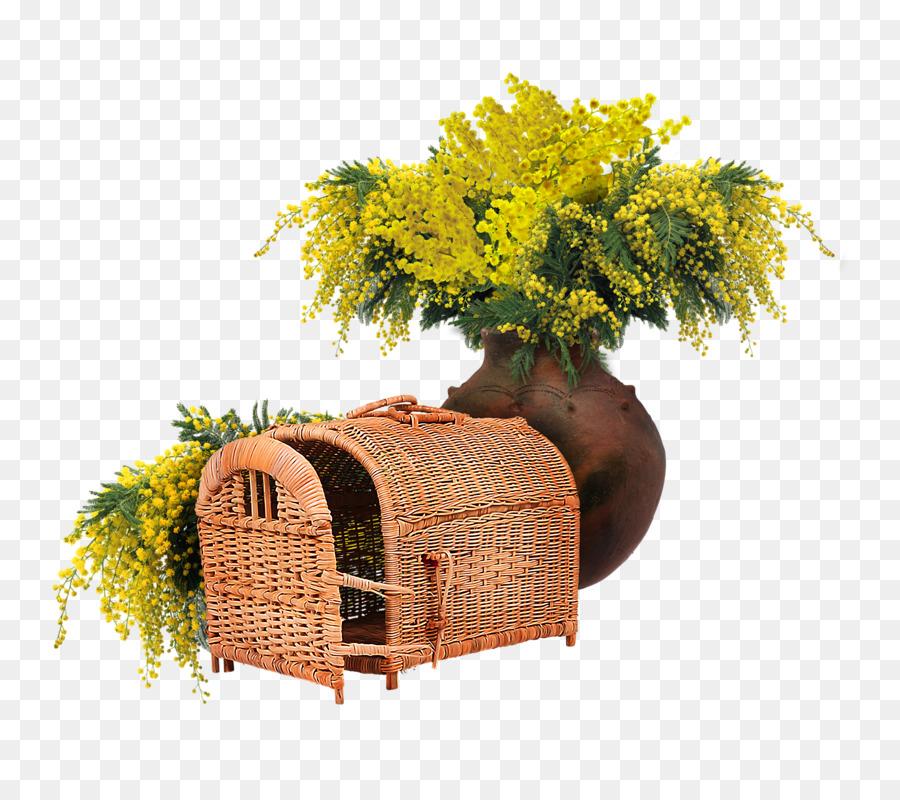 Descarga gratuita de Mimosa, Flor, Bellini imágenes PNG