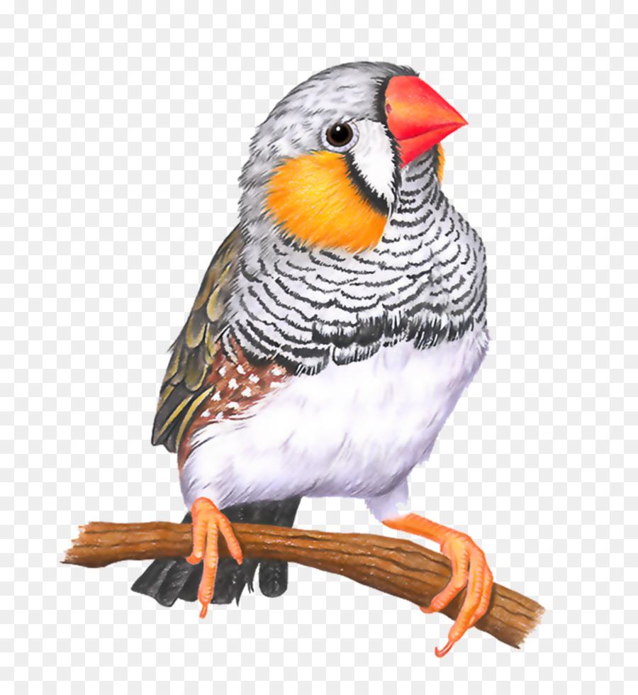 Descarga gratuita de Pájaro, Zebra Finch, Dibujo Imágen de Png