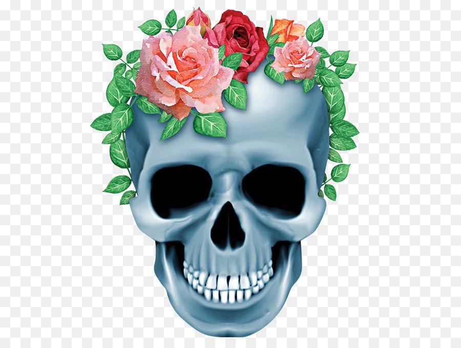 Descarga gratuita de Cráneo, Esqueleto Humano, Hueso imágenes PNG