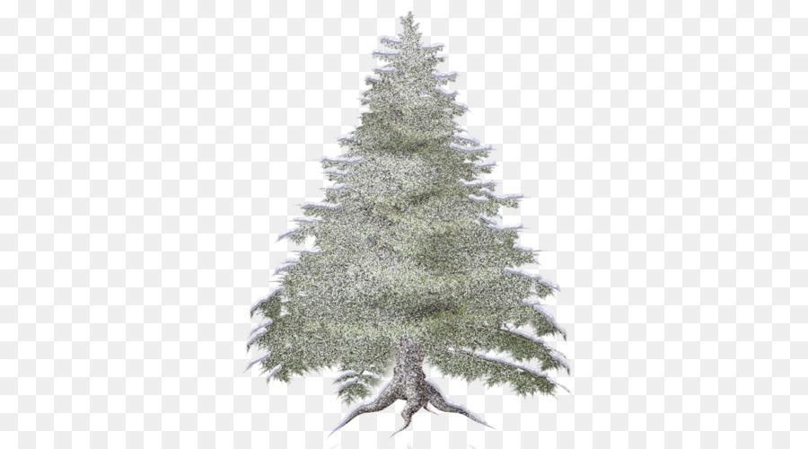 Descarga gratuita de Abeto, Bosque, árbol Imágen de Png