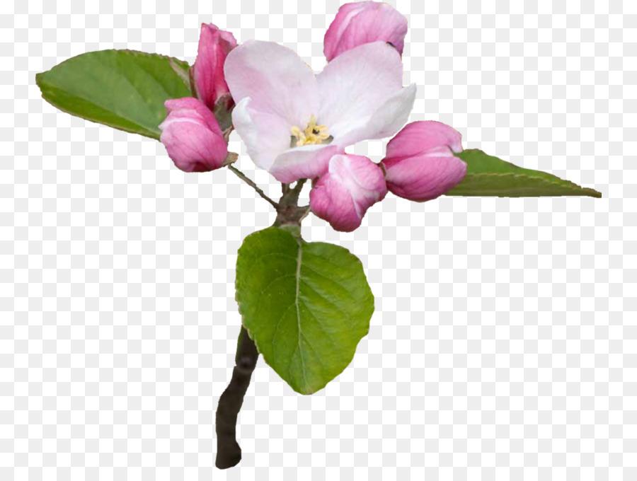Descarga gratuita de Flor, Día, Ping imágenes PNG