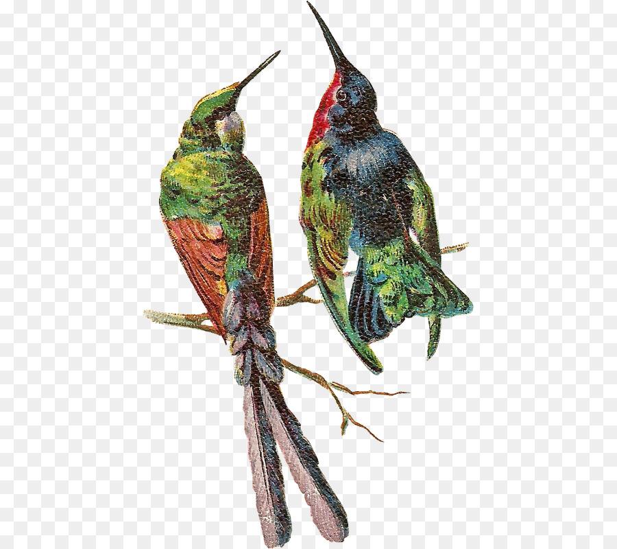 Descarga gratuita de Photoscape, Pájaro, Gimp Imágen de Png