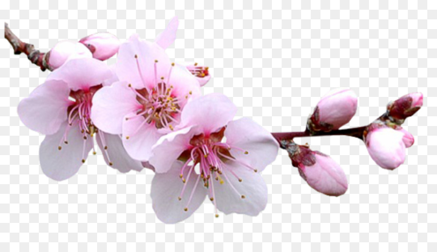 Descarga gratuita de Flor, La Primavera, Fondo De Escritorio Imágen de Png