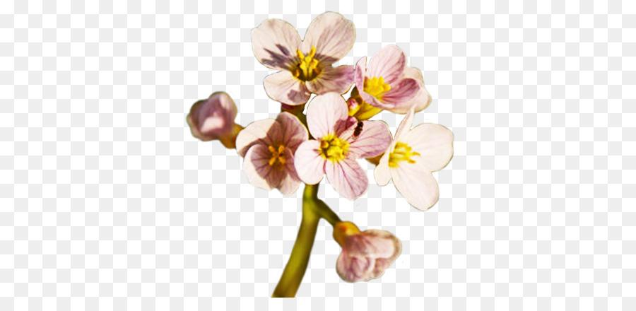 Descarga gratuita de Flor, La Primavera, Iconos De Equipo Imágen de Png