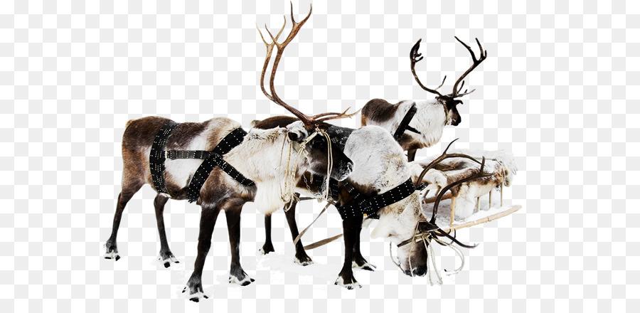 Descarga gratuita de Reno, Santa Claus, Decoración De La Navidad Imágen de Png