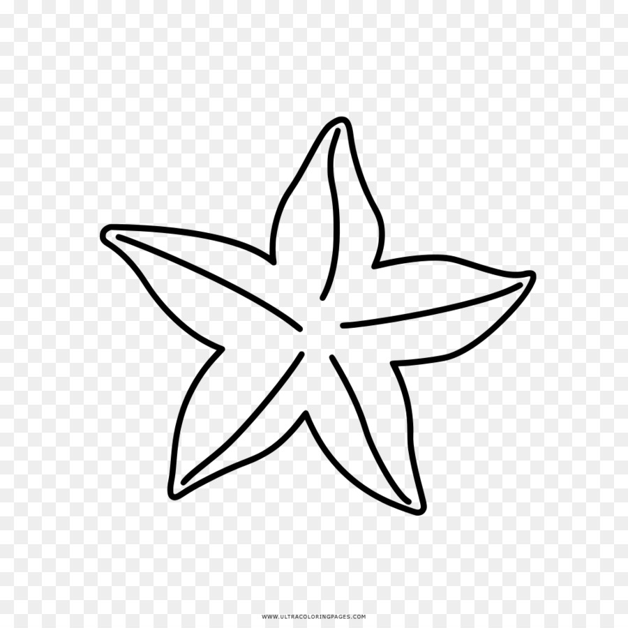 Libro Para Colorear Dibujo Estrella De Mar Imagen Png Imagen