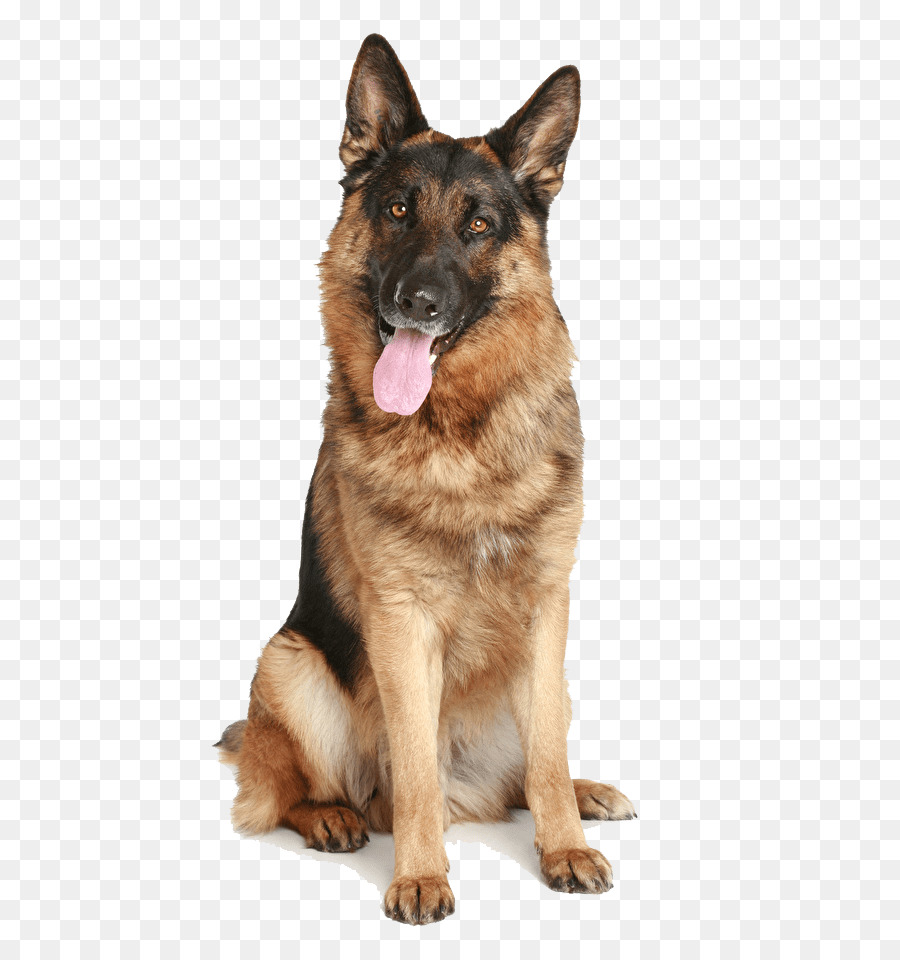 Descarga gratuita de Pastor Alemán, Shiloh Perro De Pastor, Antiguo Perro Pastor Alemán imágenes PNG