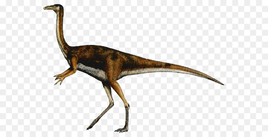 Descarga gratuita de Velociraptor, Gallimimus, Cazador De Dinosaurios Carnívoros imágenes PNG