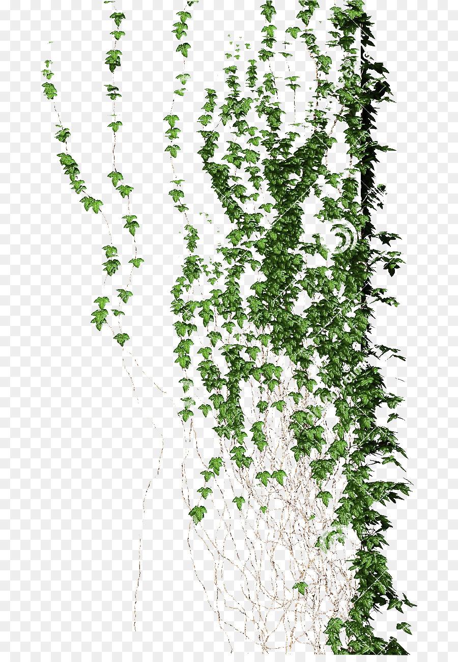 Descarga gratuita de Planta Trepadora, Vid, Flora imágenes PNG