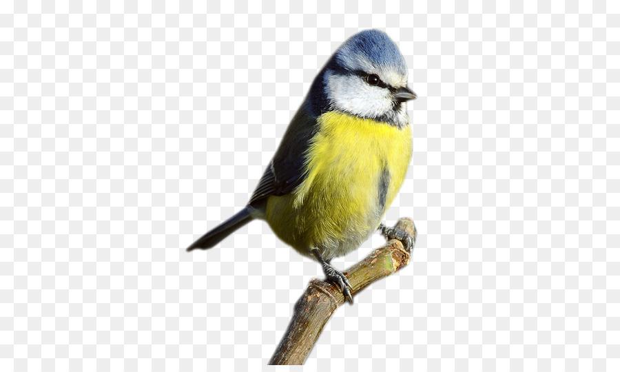 Descarga gratuita de Aves, Gorrión, Eurasia Blue Tit imágenes PNG