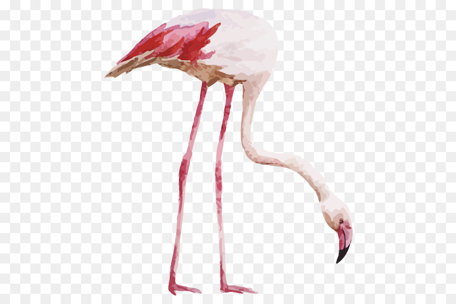 Descarga gratuita de Flamingo, Dibujo, Pintura Imágen de Png