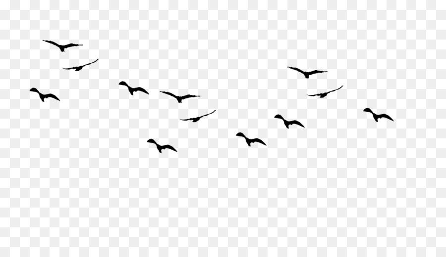 Descarga gratuita de Aves, Las Aves En Vuelo, Las Gaviotas Imágen de Png
