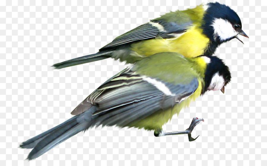 Descarga gratuita de Pájaro, Pájaro Hechos, Gorrión imágenes PNG
