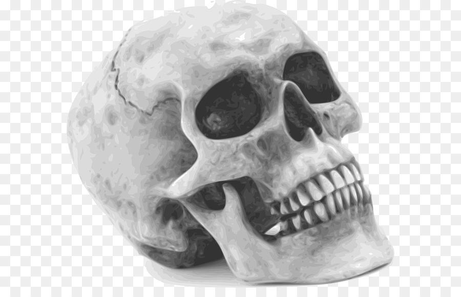 Descarga gratuita de Cráneo, Esqueleto Humano, Hueso Imágen de Png