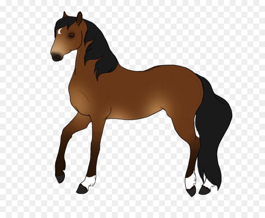 Descarga gratuita de Mustang, Colt, Mare Imágen de Png