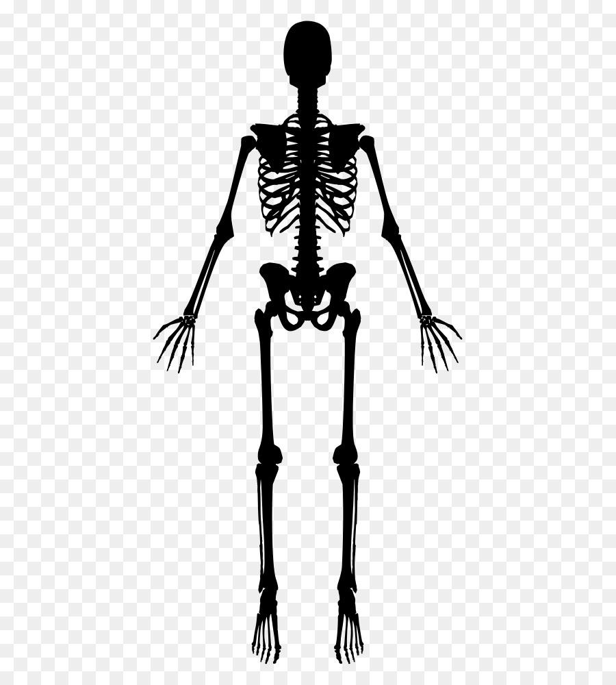 Descarga gratuita de Esqueleto Humano, Esqueleto, Cráneo Imágen de Png