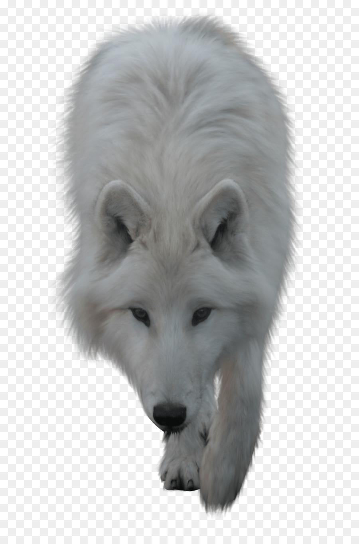Descarga gratuita de El Lobo ártico, Iconos De Equipo, Fondo De Escritorio imágenes PNG