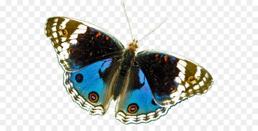 Descarga gratuita de Brushfooted Mariposas, La Polilla, Mariposa imágenes PNG