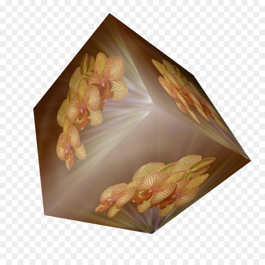 Descarga gratuita de Pétalo, Flor, Las Orquídeas imágenes PNG