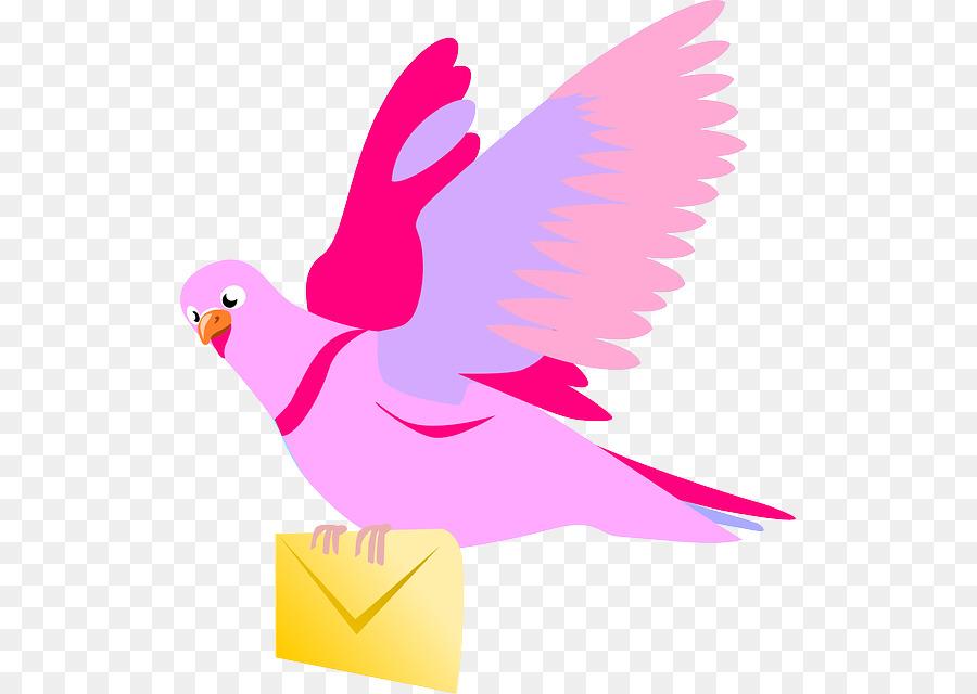 Descarga gratuita de Columbidae, Inglés Paloma Mensajera, Homing Pigeon Imágen de Png