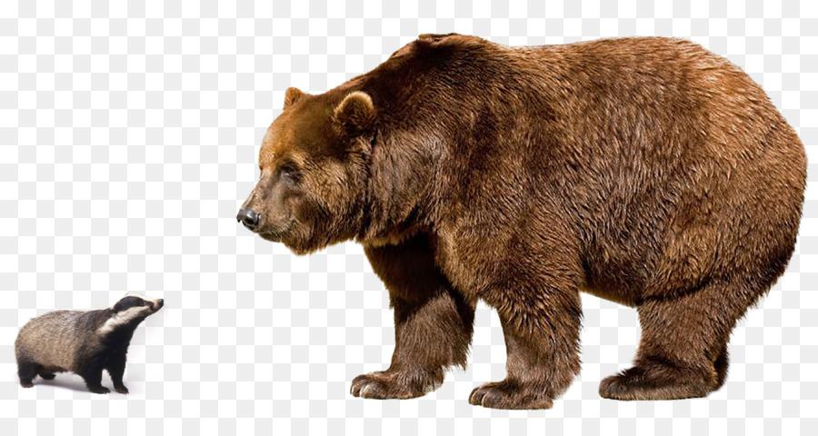 Descarga gratuita de Oso Polar, El Oso Pardo Del Himalaya, Grizzly Bear Imágen de Png