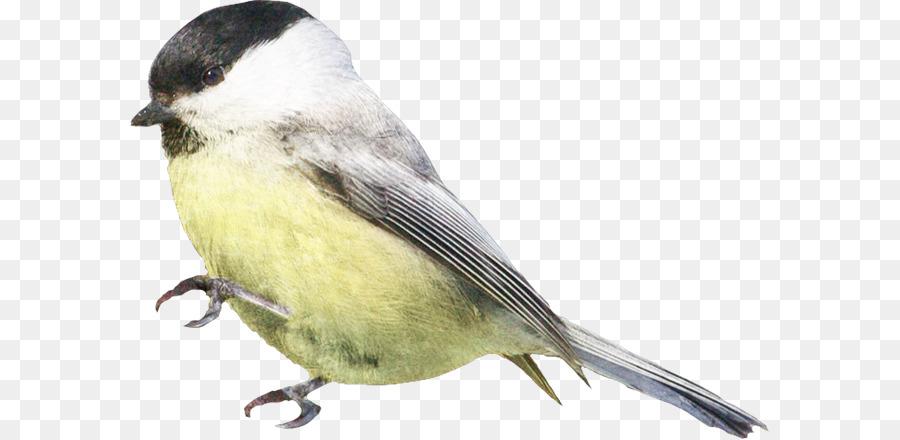 Descarga gratuita de Gorrión, Pájaro, Los Pinzones imágenes PNG