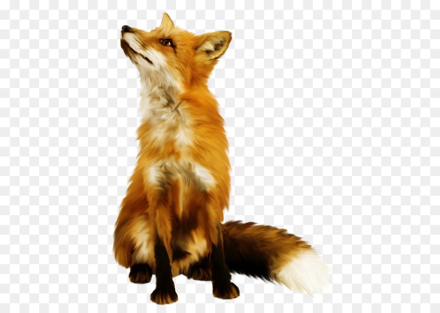 Descarga gratuita de Zorro Rojo, Zorro ártico, Fox Imágen de Png