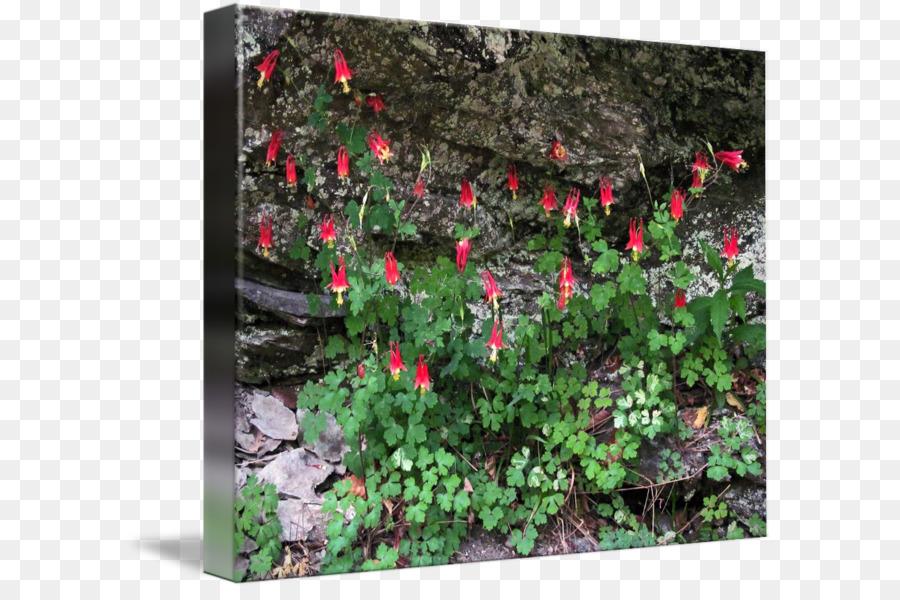 Descarga gratuita de Jardín, Paisaje, La Vegetación imágenes PNG
