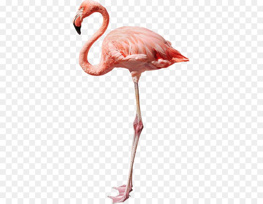 Descarga gratuita de Flamingo, Una Fotografía De Stock, Royaltyfree Imágen de Png