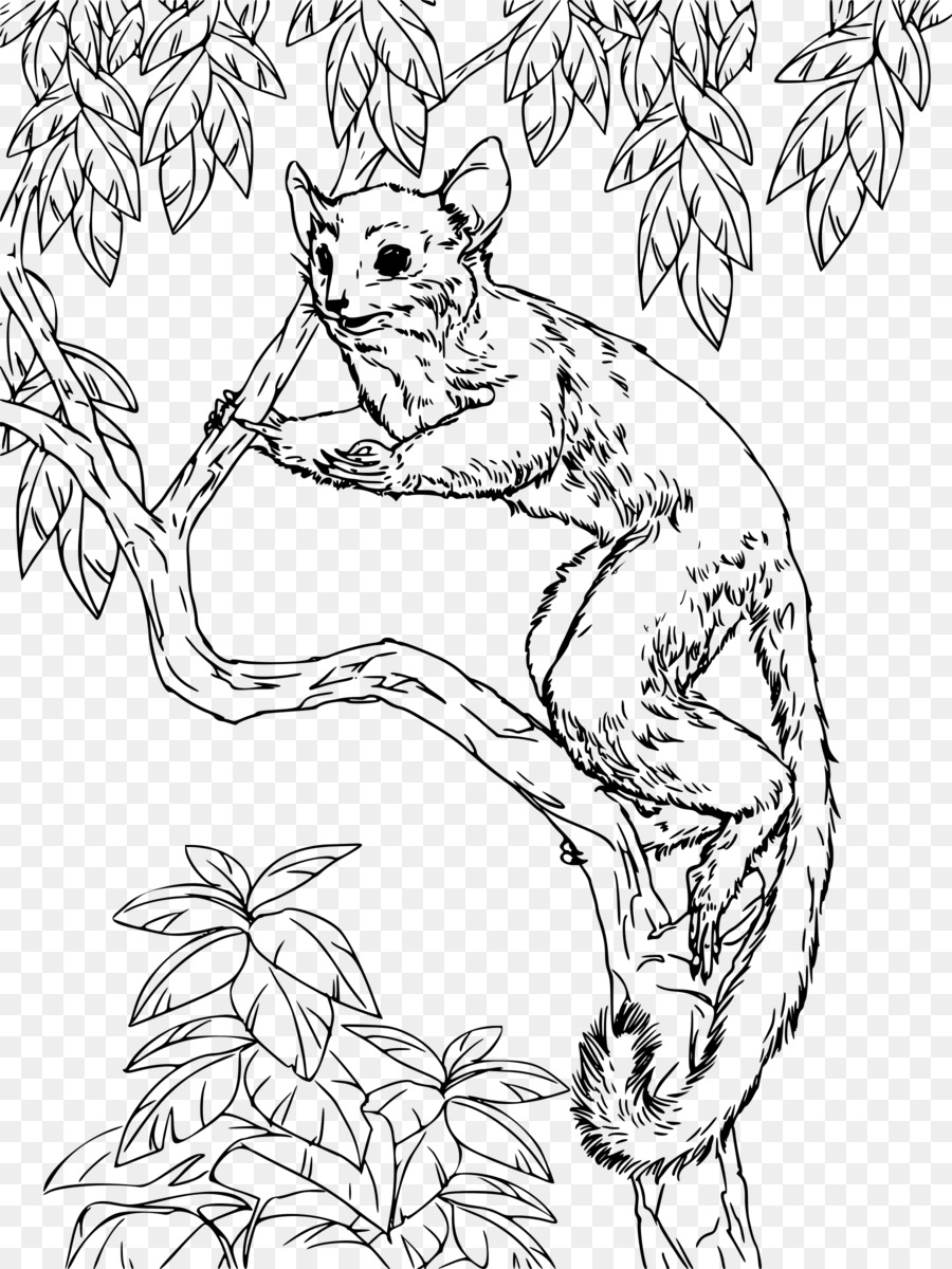 Galago Libro Para Colorear Hare Imagen Png Imagen