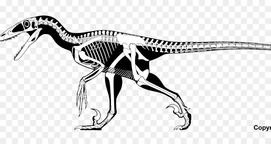 Descarga gratuita de Deinonychus, Velociraptor, Spinosaurus imágenes PNG