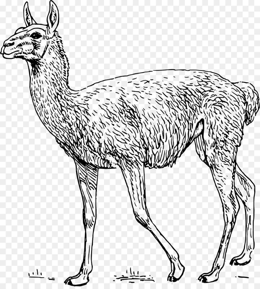 Descarga gratuita de Guanaco, Alpaca, Llama Imágen de Png