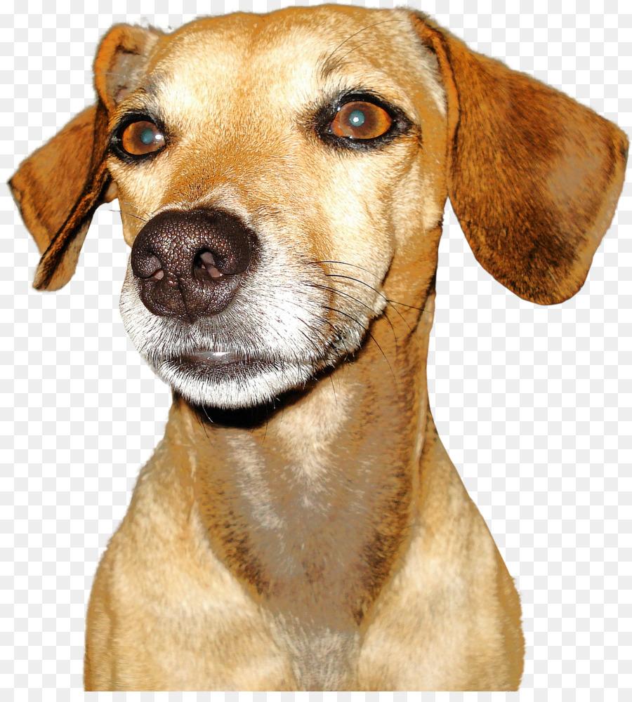 Descarga gratuita de Perro, Raza De Perro, Cachorro imágenes PNG