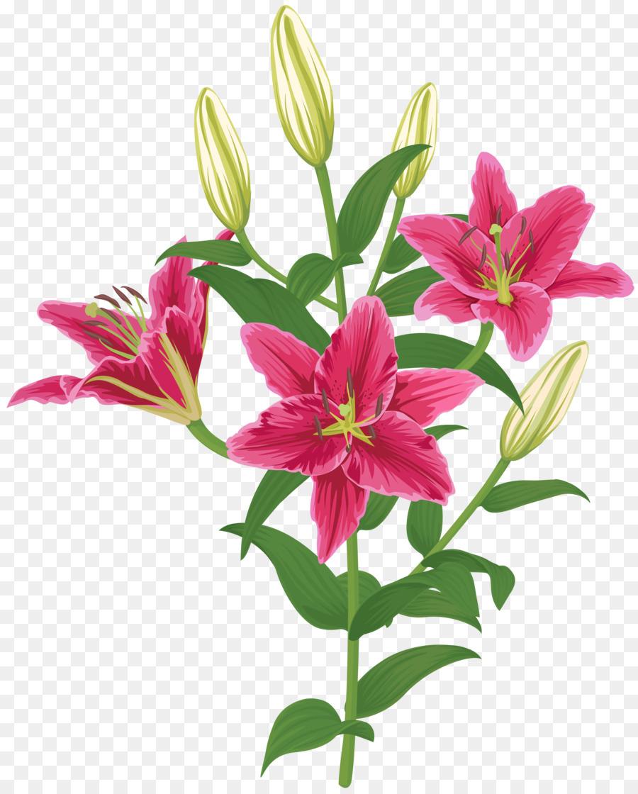 Descarga gratuita de Flor, Madonna Lily, Los Lirios Imágen de Png