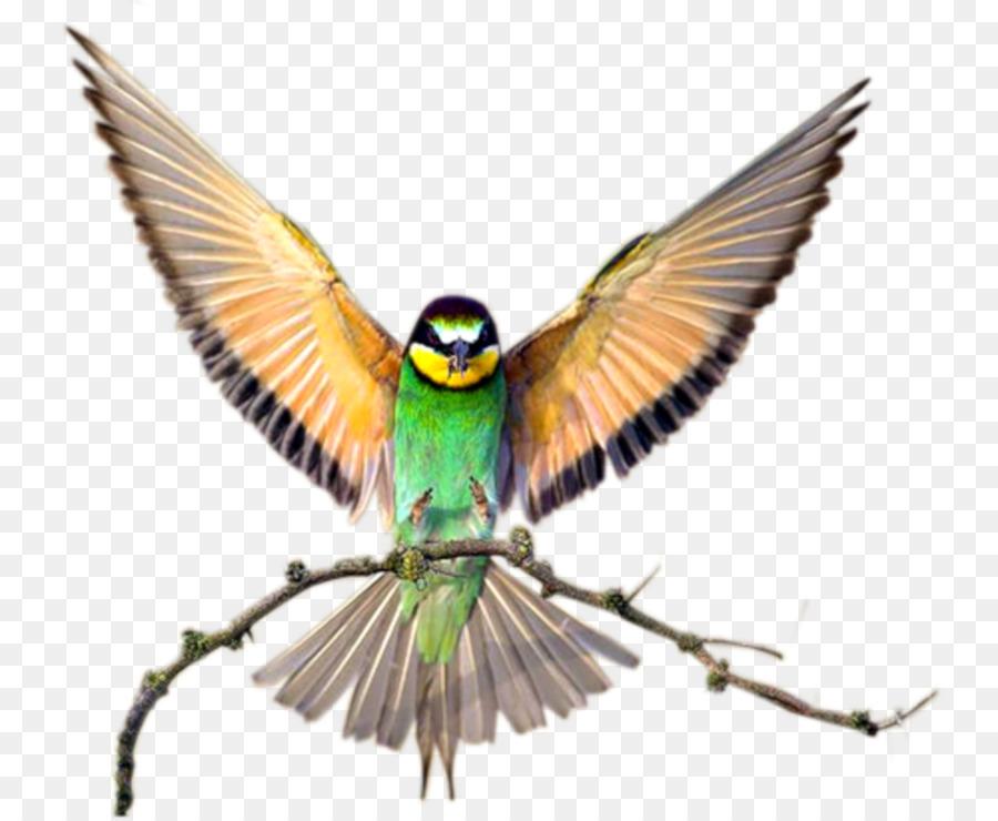 Descarga gratuita de Aves, Agapornis, Fondo De Escritorio Imágen de Png