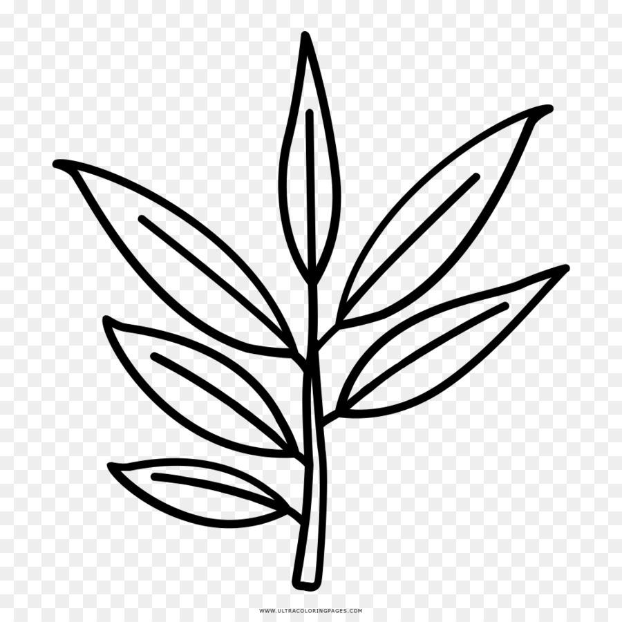 Descarga gratuita de Hoja, Dibujo, Eucalipto Polybractea Imágen de Png