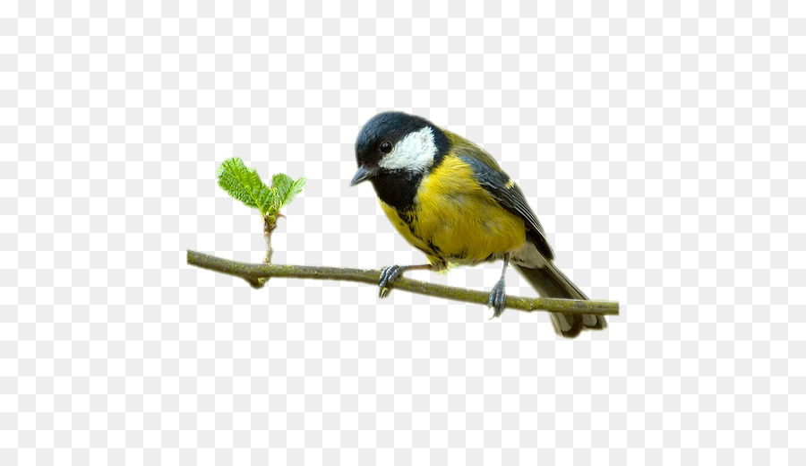 Descarga gratuita de Aves, Internet, Imagen Digital Imágen de Png